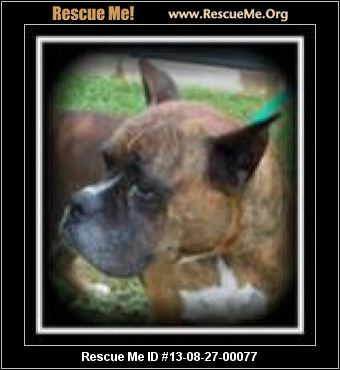 Boxer Puppies For Sale In Pasco County Fl