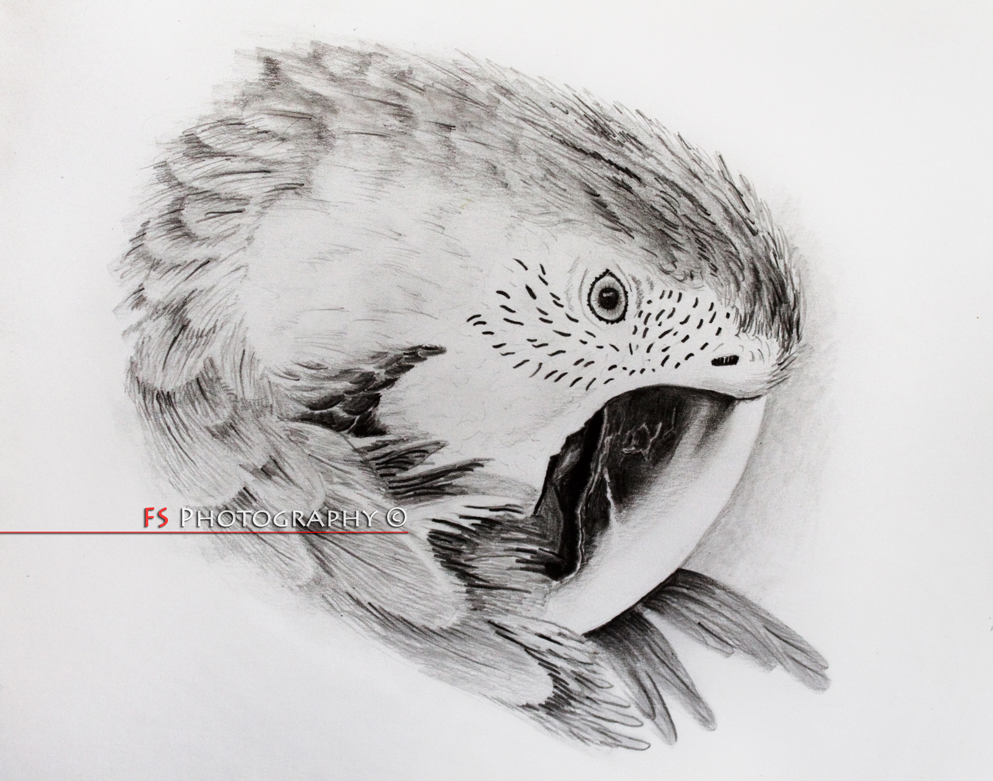 Easy Pencil Sketches Of Birds