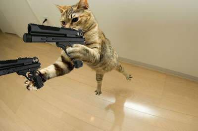 Funny Cats With Guns Animations