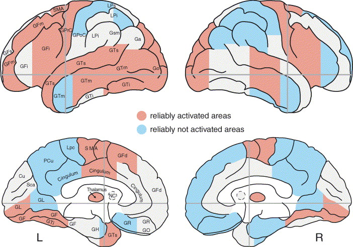 Subcortical Structures of The Brain Subcortical Brain Structures